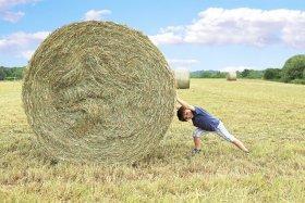 boy pushing hay